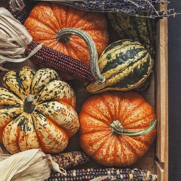 Autumn decorations, pumpkin and indian corn